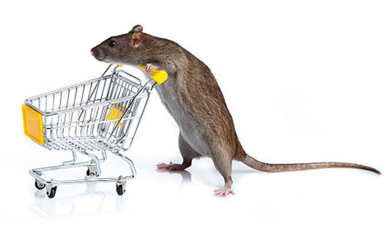 Commercial Rodent Control